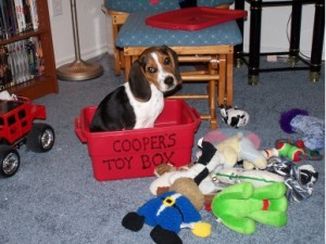 Coopers Toy Box