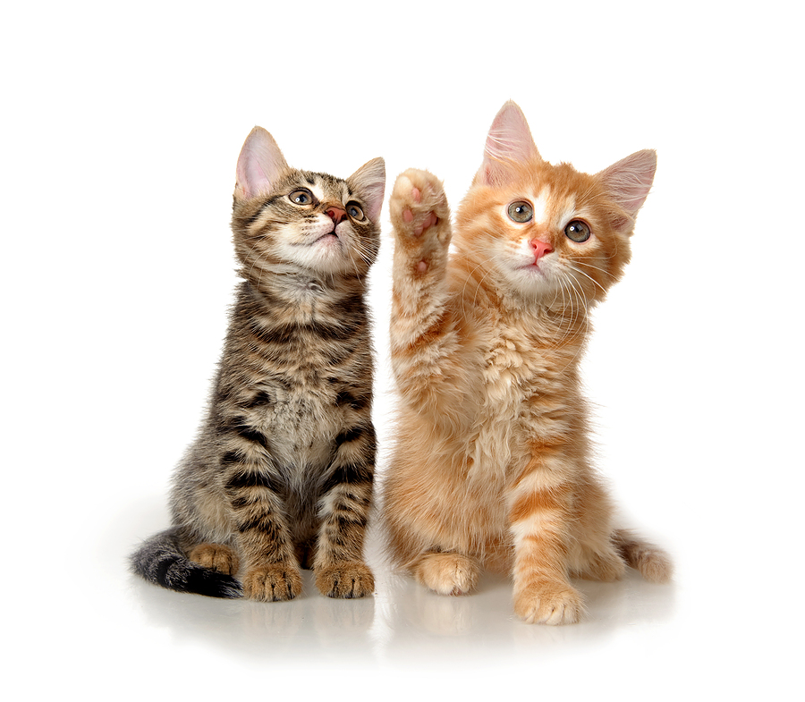 cats nose running
